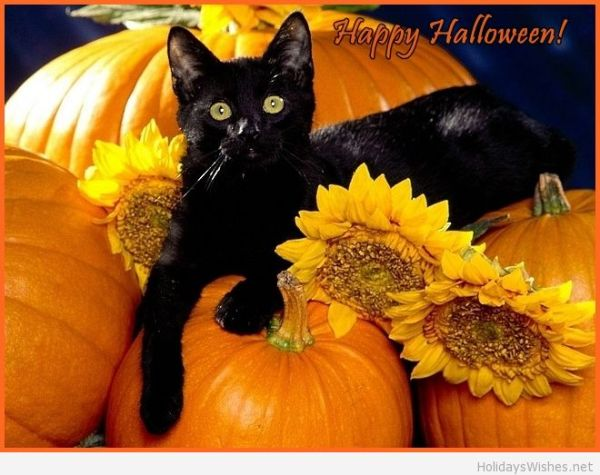 Happy-Halloween-cat-picture