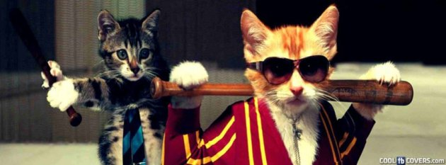 funny cats cool cover image