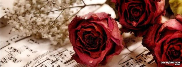 roses cover photo