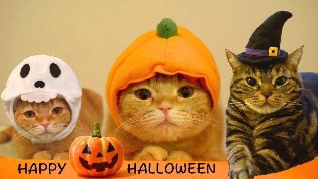 Halloween-cat-meme-2017