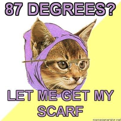 cute-funny-Cat-meme-30