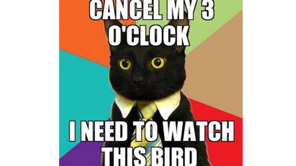 cute-funny-Cat-meme-33