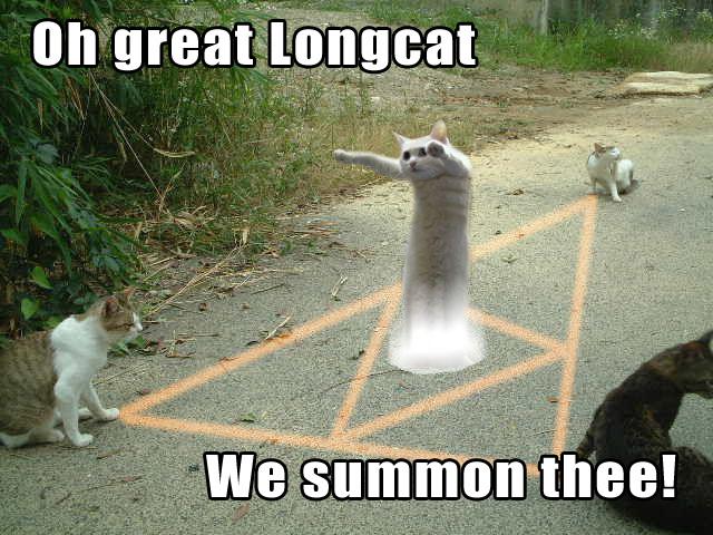 Long Cat Memes 3?ssl=1 long cat memes 3 entertainmentmesh