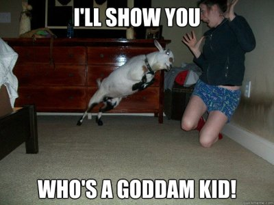 funny goat picture with captions