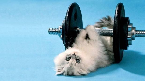 cat funny 3d picture background