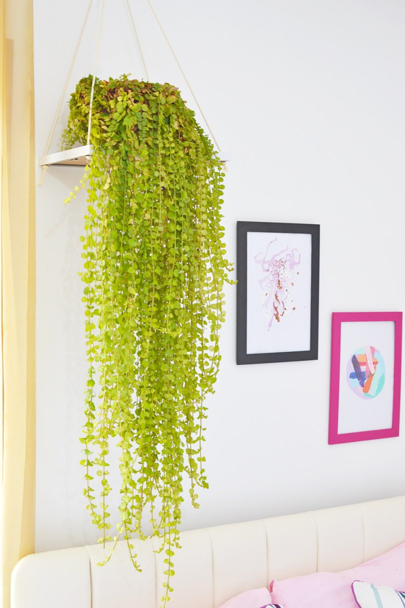 Ever thought of using a picture frame as a plant holder? You sure can with this easy tutorial