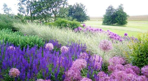 Alliums, sedums, grasses, salvia