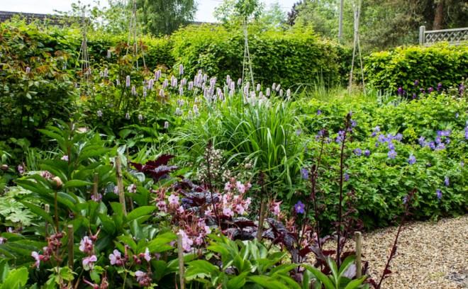 The garden today