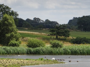 One of the lakes at Pensthorpe