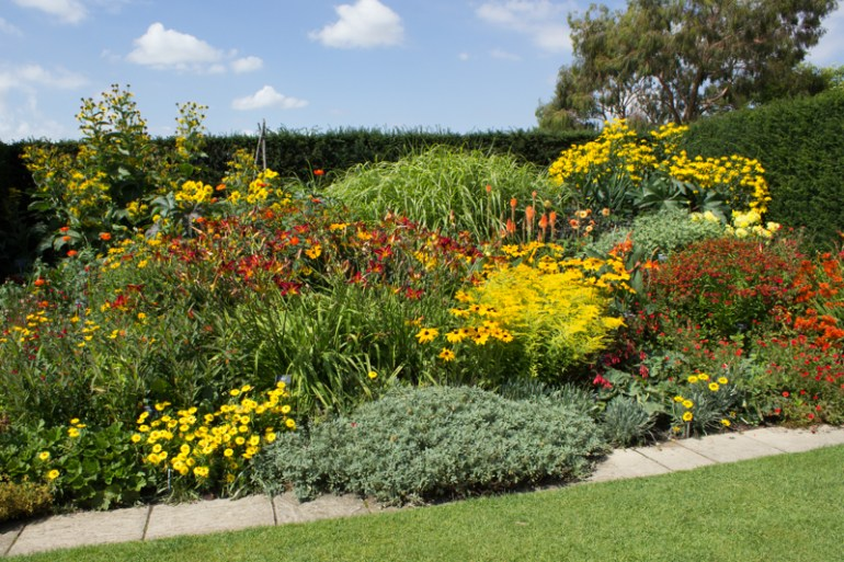 Hot colours in the Hilltop Garden