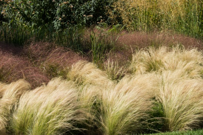 Stipa Tenuissima and Anemanthele at Hyde Hall