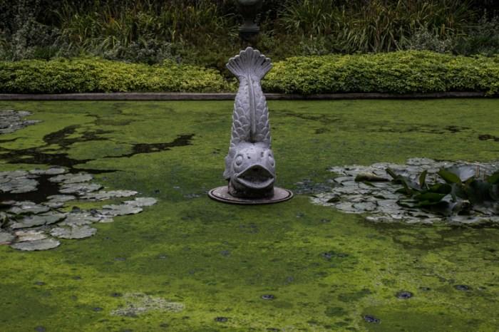 The pond in the Secret Garden