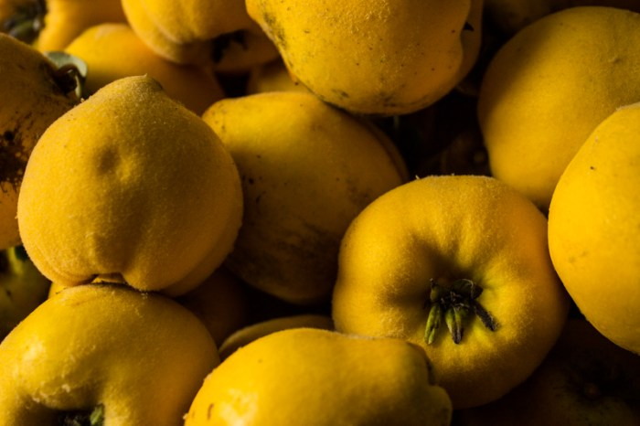 Quince 'Meechers Prolific'