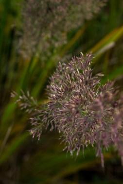 15-10-3 Monk Frith Garden LR-7345