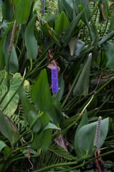 16-1-29 Durban Botanic Gardens LR-9207