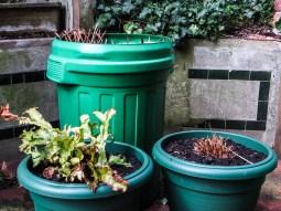 Ferns in London