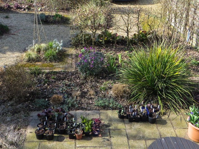 The Patio Bed with the Libertia which I hope will flower in May