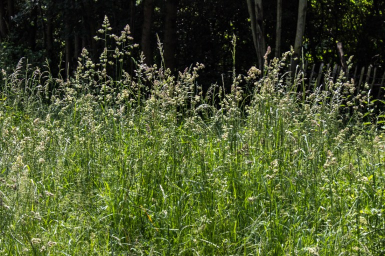 Grasses at Stave Hill