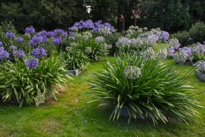 16-9-1-parc-botanique-de-haute-bretagne-8812