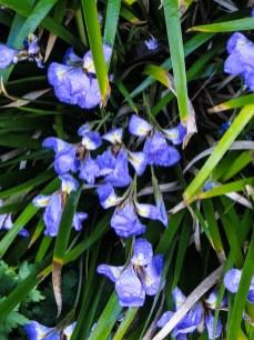 17-3-26 Spring flowers LR-5597