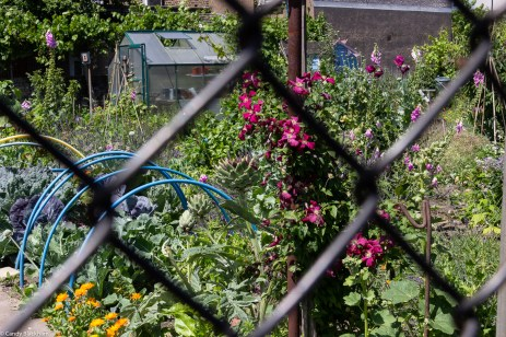 The Royal Naval Place allotments