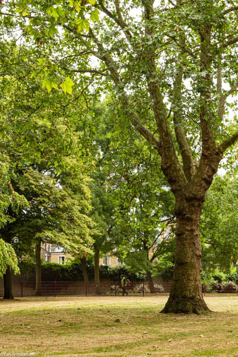Eckington Gardens Park in New Cross