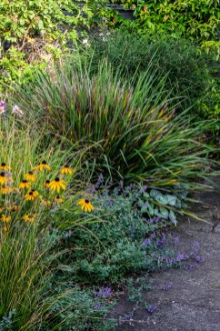 Rudbeckia, Pennisetum, Miscanthus, and Brunnera