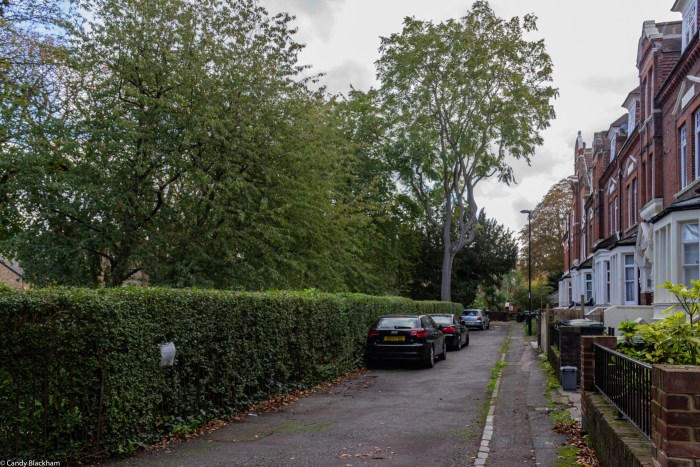 The private road, with neat hedge and iron railings