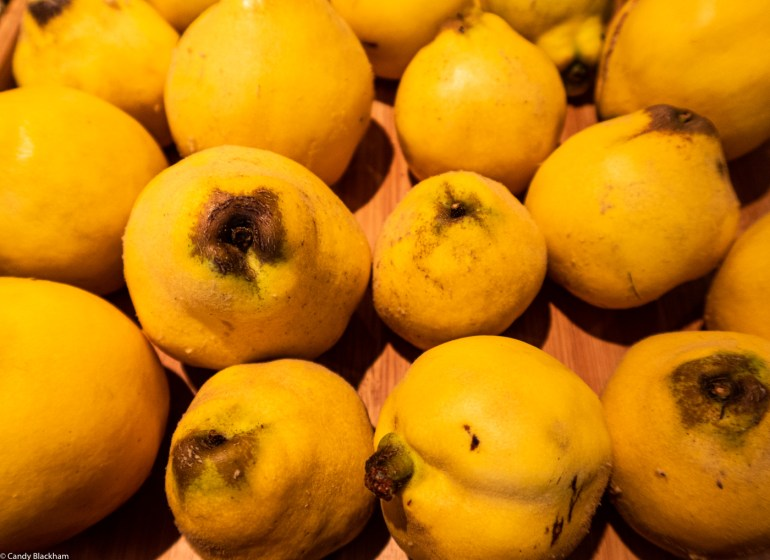 quinces in the Fortnight Garden