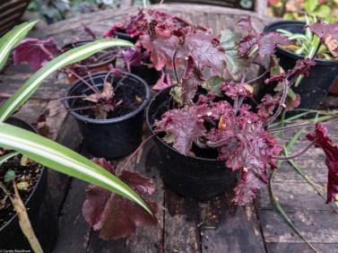 New cuttings