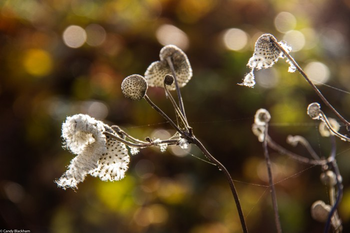 Seed heads in Six on Saturday in The Fortnight Garden