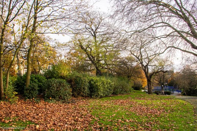 Shrub border in Telegraph Hill Park in Lewisham