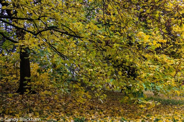 Mountsfield Park in Lewisham