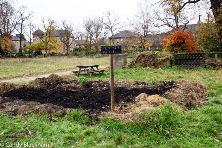Community Garden in Mountsfield Park