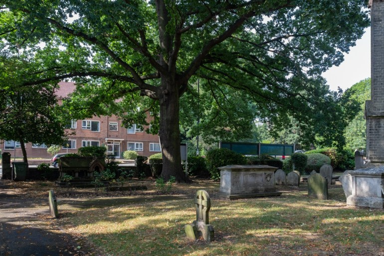 Oak tree in the front of the Church of St Bartholomew in Sydenham