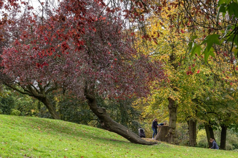 Autumn colours at the Horniman Museum