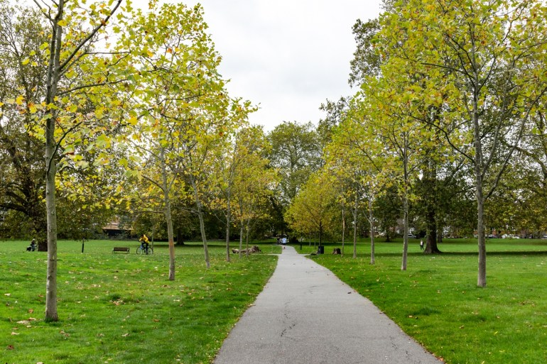 A new avenue of London Plane trees in the South Field in Ladywell Fields