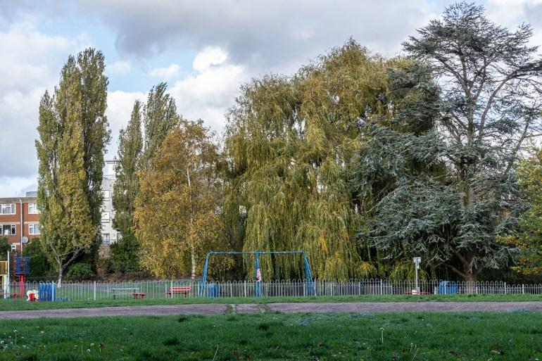 Poplars, willows and cedar tree