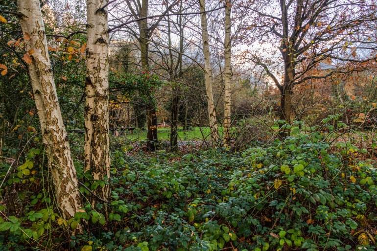 Albion Millennium Green