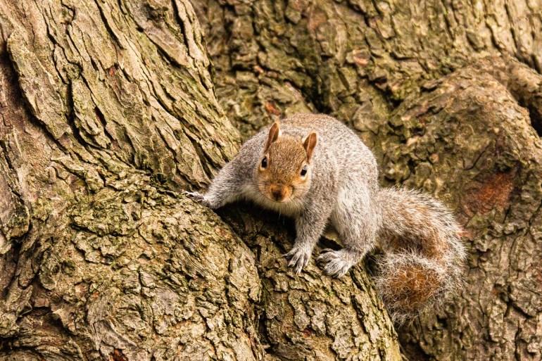 Squirrel in Edith Nesbit Gardens