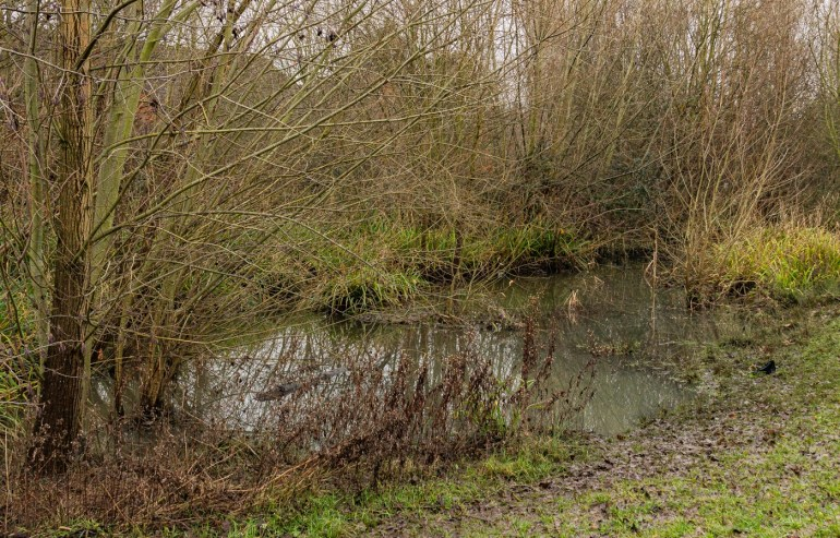 Flooding in Chinbrook Meadows to slow the water flow further downstream