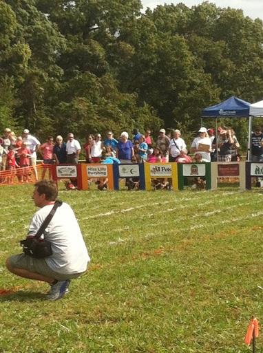 Wiener Dog Races; Bella Vista, AR