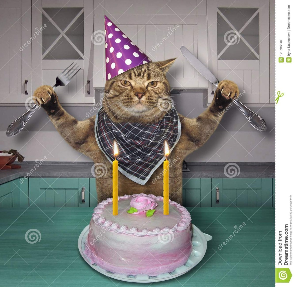 Cat With Birthday Cake In A Hat The Stock Photo Image Of