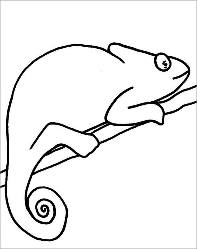 Chameleon Coloring Page Chameleon Coloring Pages Coloringbay