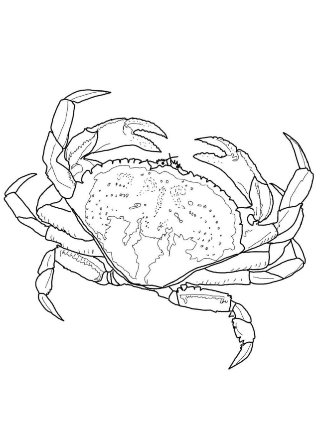 Crab Coloring Pages Horseshoe Crab Coloring Pages Dungeness Clipart Super Coloring Page
