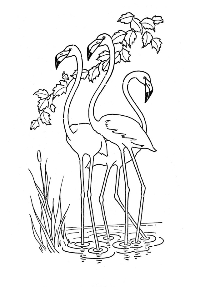 Flamingo Coloring Pages 4 Flamingo Pictures The Graphics Fairy