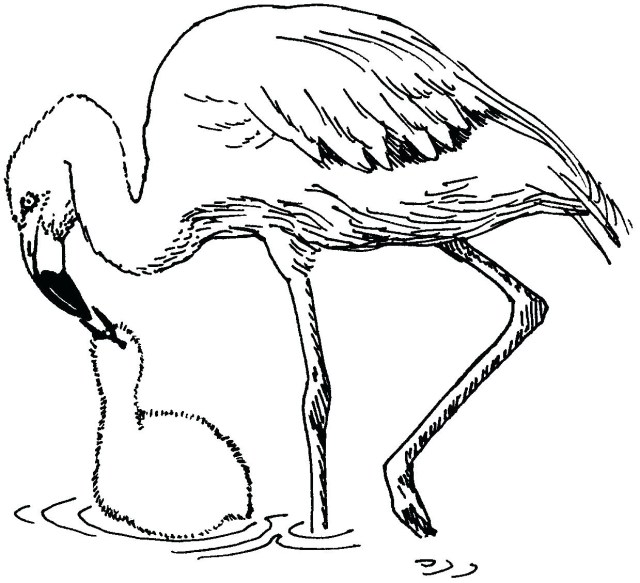 Flamingo Coloring Pages Flamingo Coloring Pages Best Free Coloring Pages Site