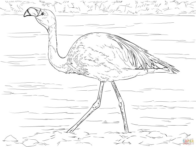 Flamingo Coloring Pages Flamingos Coloring Pages Free Coloring Pages