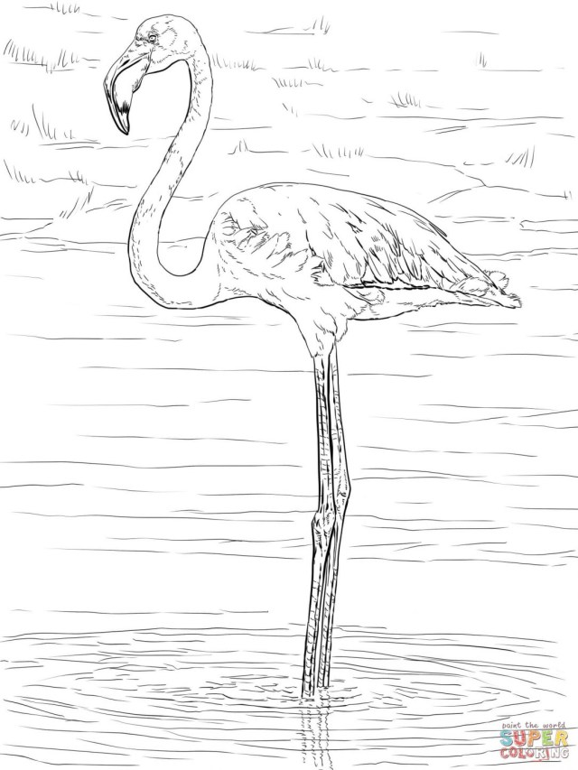 Flamingo Coloring Pages Greater Flamingo Coloring Page Funny Mandala Cute I Fertility
