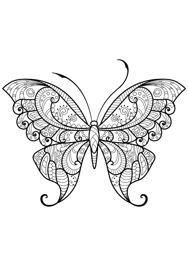 Free Butterfly Coloring Pages Butterflies To Download For Free Butterflies Kids Coloring Pages